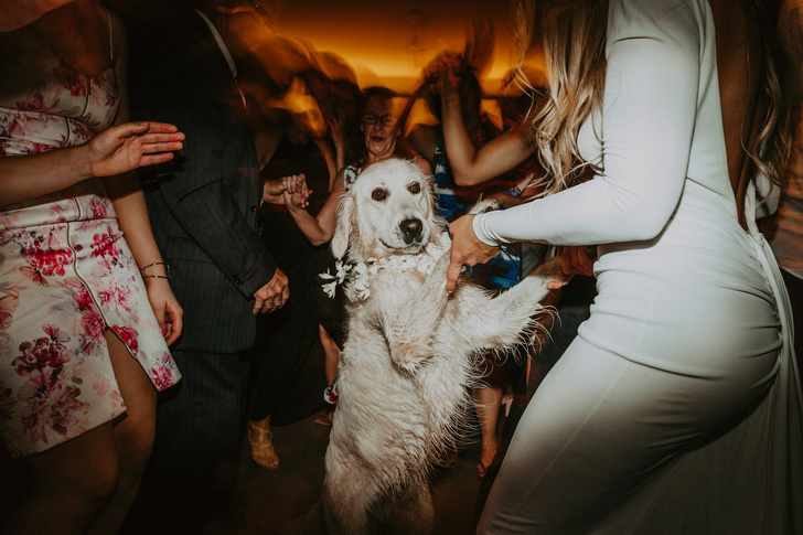 كلب في حفل زفاف