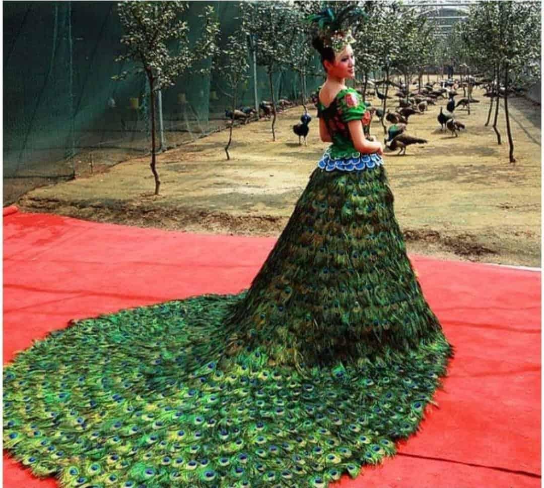 """فستان زفاف على شكل طاووس من تصميم """"فيرا فانغ"""""""
