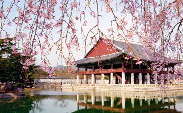 شهر العسل في كوريا