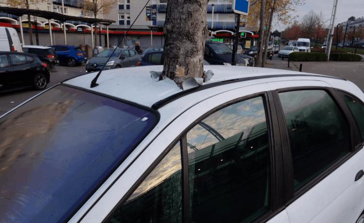 حقيقة الشجرة التي اخترقت السيارة