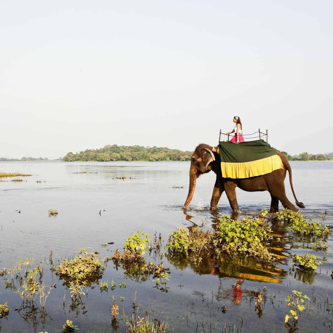 أفضل وجهة لشهر العسل : سريلانكا