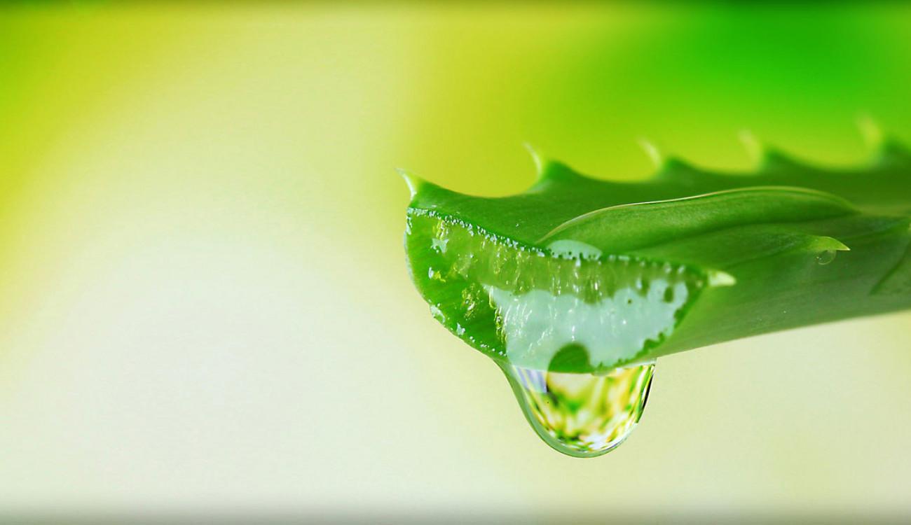 الألوفيرا وأهميتها للبشرة عليك تجربتها